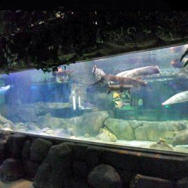 Prilagođeni luksuzni dizajn podvodni Deblji akrilni paneli Akvarijski prozor stakleni list