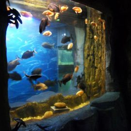 2018 Vrhunska akrilna ploča za prozor akvarija
