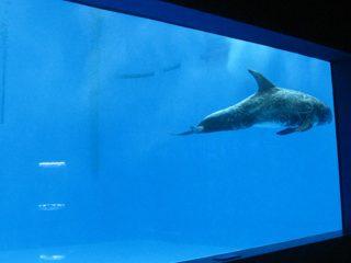 visoke kvalitete Veliki akril akvarij / prozor bazena podvodni debeli prozorski list