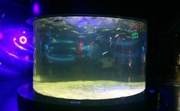 Akrilni spremnik za ribu