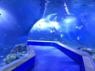 Jasno pmma akril Veliki plastični tunel akvarija